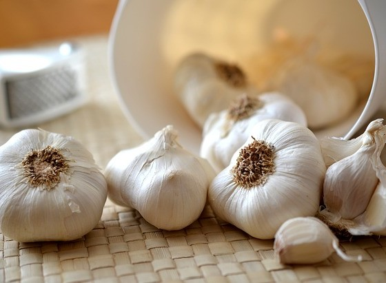 Garlic fights against bloodsuckers
